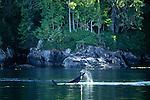 Orca, Johnstone Strait, Vancouver Island, British Columbia, Canada