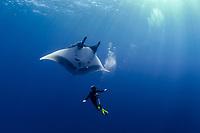 scuba diver and giant oceanic manta ray, Mobula birostris, formerly Manta birostris, San Benedicto, Revillagigedo (Socorro) Islands, Mexico, East Pacific Ocean