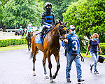 JUNE 03, 2020 :Fauci  in the paddock for $64,000 Maiden Special Weight, fortwo year ols going 5 furlongs, at Belmont Park, Elmont, NY.  Sue Kawczynski/Eclipse Sportswire/CSM