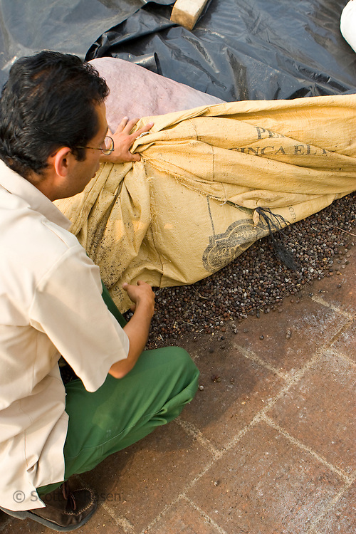 Tour guide shows group of foriegners dried coffee beans at a plantation near Antigua, Guatemala