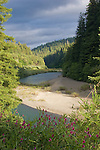 California, Eel River, Humboldt Redwoods State Park, Redwood trees, old growth forest, Humboldt County, Highway 101, California, USA,