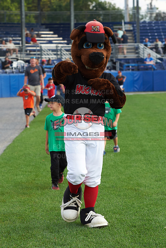 Batavia Muckdogs mascot Homer during an on field promotion before a game against the Tri-City ValleyCats on July 14, 2017 at Dwyer Stadium in Batavia, New York.  Batavia defeated Tri-City 8-4.  (Mike Janes/Four Seam Images)
