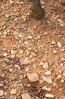 Soil detail. Stony. Sand. Calcareous. Rugiens sector. Pommard, Cote de Beaune, d'Or, Burgundy, France
