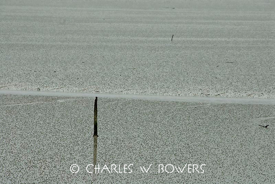 The intricate waterways of the Marlborough Sounds have many tidal flatlands.<br /> <br /> -Limited Edition of 50 Prints