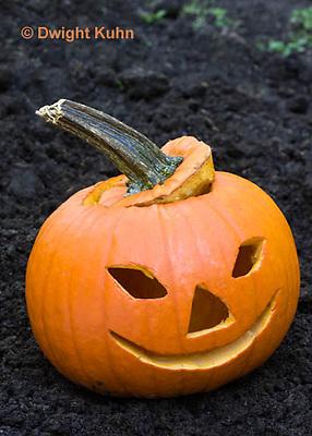 DC08-612z Jack-o-Lantern Pumpkin placed in garden after Halloween