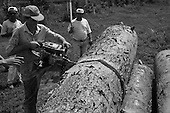 Mato Grosso State, Brazil. Man cutting up a tree with a chainsaw in a sawmill yard.