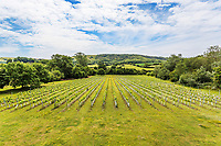 BNPS.co.uk (01202 558833)<br /> Pic: Hamptons/BNPS<br /> <br /> Pictured: The vineyard.<br /> <br /> An incredible Arts and Crafts country house with its own vineyard is on the market for offers over £7m.<br /> <br /> The Grade II listed St Joseph's Hall is a striking 111-year-old property that was home to the Bishop of Arundel for 40 years.<br /> <br /> It has a wealth of period features, an indoor swimming pool and seven acres of vineyard with mostly Chardonnay grapes, which the owners sell to a local winery.<br /> <br /> The house in Storrington, West Sussex, has 17 acres of land with beautiful views over the South Downs.
