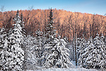 A snowy sunrise in the Green Mountain National Forest, Woodford, VT, USA