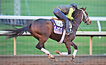 October 26, 2015 :   Rachel's Valentina, trained by Todd A. Pletcher and owned by Stonestreet Thoroughbred Holdings LLC, exercises in preparation for the The 14 Hands Winery Breeders' Cup Juvenile Fillies at Keeneland Race Track in Lexington, Kentucky on October 26, 2015. Scott Serio/ESW/CSM