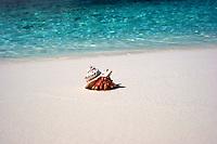 Hermit Crab on Prison Island, Cocos Keeling Islands, Indian Ocean