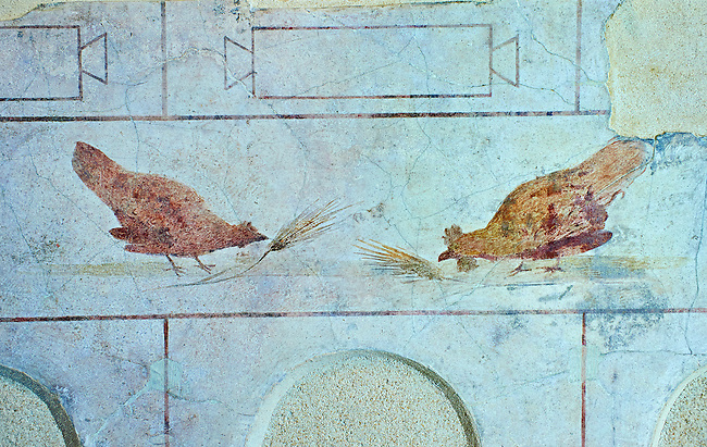 Roman Fresco of a chickens from The Large Columbarium in Villa Doria Panphilj, Rome. A columbarium is usually a type of tomb with walls lined by niches that hold urns containing the ashes of the dead.  Large columbaria were built in Rome between the end of the Republican Era and the Flavio Principality (second half of the first century AD).  Museo Nazionale Romano ( National Roman Museum), Rome, Italy.