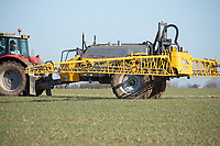 26-3-2021 Applying liquid nitrogen to Winter Wheat<br /> ©Tim Scrivener Photographer 07850 303986<br />      ....Covering Agriculture In The UK....
