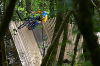"""Darren Berrecloth  """"Bearclaw""""  ..Ashams Quarry , near Frome, Somerset .   May 2007..pic copyright Steve Behr / Stockfile"""