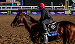 October 30, 2019: Breeders' Cup Juvenile  entrant Dennis' Moment, trained by Dale L. Romans, exercises in preparation for the Breeders' Cup World Championships at Santa Anita Park in Arcadia, California on October 30, 2019. Carolyn Simancik/Eclipse Sportswire/Breeders' Cup/CSM