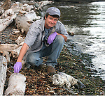 Photographer and writer Bob Friel during his work as a volunteer with the Marine Mammal Stranding Network. The abandoned harbor seal pup was treated and later released back into the wild.
