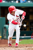 Thomas Pham #27 of the Springfield Cardinals lays down a bunt during a game against the San Antonio Missions at Hammons Field on April 16, 2013 in Springfield, Missouri. (David Welker/Four Seam Images)