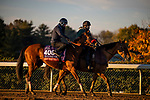 October 31, 2020: Lady Prancealot, trained by trainer Richard Baltas, exercises in preparation for the Breeders' Cup Filly & Mare Turf at Keeneland Racetrack in Lexington, Kentucky on October 31, 2020. Alex Evers/Eclipse Sportswire/Breeders Cup