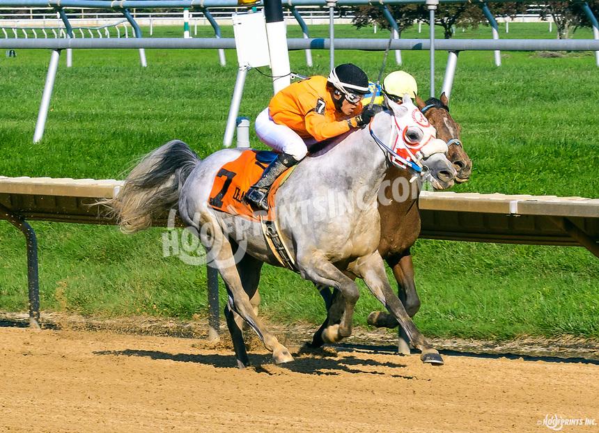 Easter Man winning The Delaware Park Arabian Classic (grade 1) at Delaware Park on 8/19/17