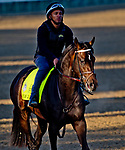 LOUISVILLE, KY - APRIL 30: My Boy Jack, trained by Keith Desormeaux, exercises in preparation for the Kentucky Derby at Churchill Downs on April 30, 2018 in Louisville, Kentucky. (Photo by John Voorhees/Eclipse Sportswire/Getty Images)