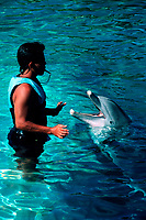 Bottlenose dolphin and trainer,   Tursiops truncatus, (c)    Hawaii's Sea Life Park, Oahu, Hawaii, Pacific Ocean