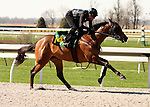 01 April 2010.  Hip #141 More Than Ready - York Woods filly.