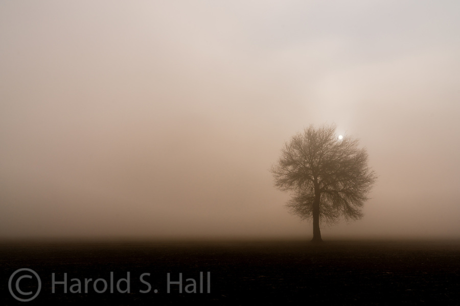 This lone tree stood in a corn field in Meridian, Idaho, until the farmer cut it down in recently.