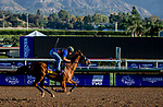 October 30, 2019: Breeders' Cup Distaff entrant Blue Prize, trained by Ignacio Correas, exercises in preparation for the Breeders' Cup World Championships at Santa Anita Park in Arcadia, California on October 30, 2019. Carolyn Simancik/Eclipse Sportswire/Breeders' Cup/CSM