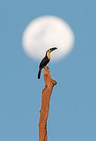 Brazil 2018 Birds