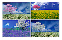 Series of four meadows-- numinous real and ideal. blooming flowers and trees.