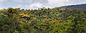 Tropical Premontane Rainforest. Central Caribbean foothills, Costa Rica. May. Digitally stitched panorama.