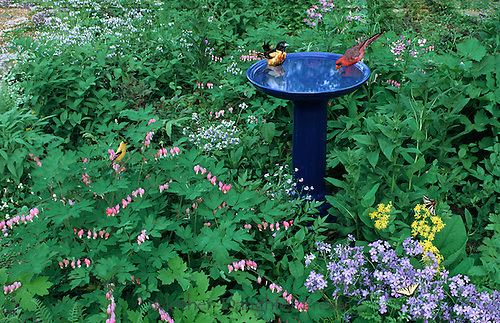 Birds at blue ceramic bird bath in garden. Blooming flowers with oriole, cardinal, goldfinch and butterflies in shade garden