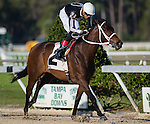 OLDSMAR, FL - JANUARY 21: R Angel Katelyn #2 (white cap), ridden by Edwin Gonzalez, wins the Gasparilla Stakes on Skyway Festival Day at Tampa Bay Downs on January 21, 2017 in Oldsmar, Florida. (Photo by Douglas DeFelice/Eclipse Sportswire/Getty Images)