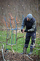 23/02/18<br /> <br /> Chris Robinson checks frames.<br /> <br /> Full Grown furniture is grown in a woodland near Wirksworth, Derbyshire. <br /> <br /> As seen here: <br /> http://www.dailymail.co.uk/news/article-5587659/Willows-transformed-seats-seven-years-available-buy-5-000.html<br /> <br /> All Rights Reserved: F Stop Press Ltd. +44(0)1335 344240  www.fstoppress.com.