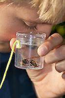 Junge, Kind beobachtet Insekt in Becherlupenglas, Becherlupe, Lupe