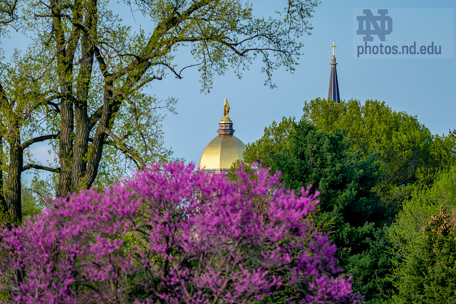 May 10, 2018; Dome and Basilica steeple, spring 2018 (Photo by Matt Cashore/University of Notre Dame)