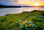 Idaho, North, Kootenai County, Coeur d'Alene. Wildflowers bloom on a hillside overlooking Lake Coeur d'Alene at sunset in spring.