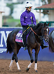DEL MAR, CA - NOVEMBER 02: Rushing Fall, owned by eFive Racing Thoroughbreds and trained by Chad C. Brown, exercises in preparation for Breeders' Cup Juvenile Fillies Turf at Del Mar Thoroughbred Club on November 2, 2017 in Del Mar, California. (Photo by Kazushi Ishida/Eclipse Sportswire/Breeders Cup)