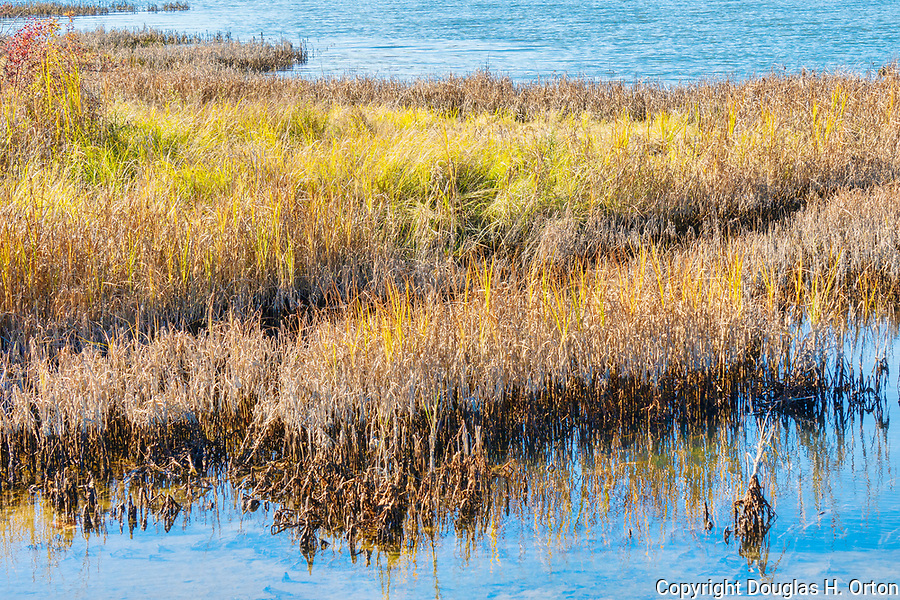 Theler Wetlands Nature Preserve, on Hood Canal, fiord, Washington, Belfair, Washington.  Trails, hiking, boardwalks and wildlife.