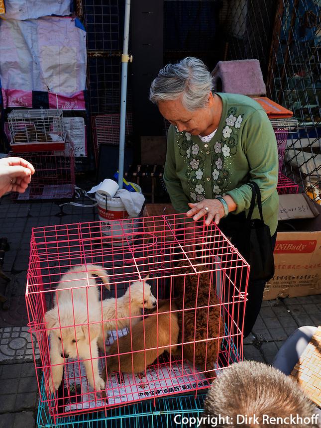 Kleintiermarkt an der Fuxingmen Dajie, Peking, China, Asien<br /> Petmarket at Fuxingmen Dajie, Beijing, China, Asia