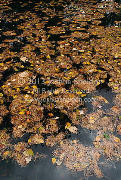 Fallen leaves on top of swimming pool