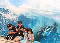 Beluga whale summer attraction at Hakkeijima Sea Paradise