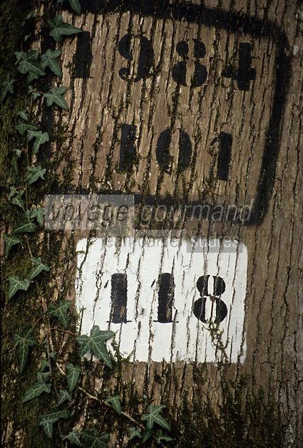 Europe/France/Centre/41/Loir-et-Cher/Forêt de Russy/Environ de Saint-Gervais-la-Forêt : Tronc de chêne marqué utilisé par la tonnellerie Seguin Moreau à Cognac