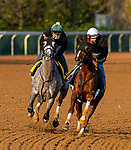 November 1, 2020: Bill Mott runners Tacitus (gray) works in company with Channel Maker at Keeneland Racetrack in Lexington, Kentucky on November 1, 2020. Alex Evers/Eclipse Sportswire/Breeders Cup /CSM