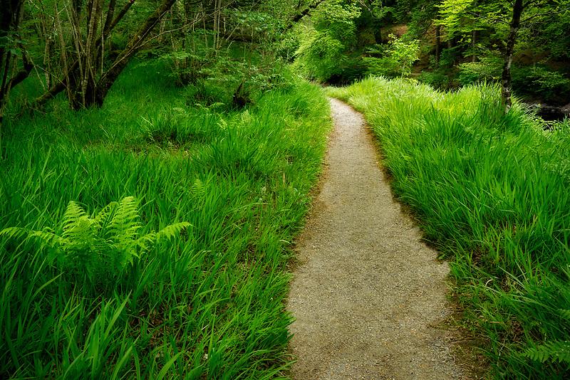 Trail along Ballynahinch River. County Galway, Ireland