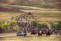 Annual Buffalo Roundup Custer State Park South Dakota.
