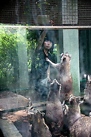 A girl feeds junk food to a group of raccoons in the Qingdao Zoo in Qingdao, Shandong, China.