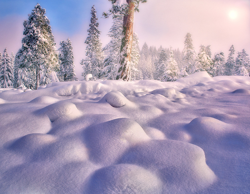 Snow covered hummocks and trees in Willamette National Forest, Oregon.