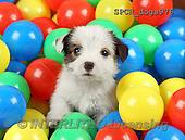 Xavier, ANIMALS, REALISTISCHE TIERE, ANIMALES REALISTICOS, dogs, photos+++++,SPCHDOGS976,#A#