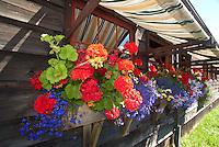 Overflowing Flower Boxes at Orcas Island Artworks, Orcas Island, San Juan Islands, Washington, US