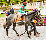 OCT11, 2020 : Bright Devil (IRE) in the Grade 3 Futurity  Stakes, for 2-year olds on the turf, at Belmont Park, Elmont, NY.  Sue Kawczynski/Eclipse Sportswire/CSM